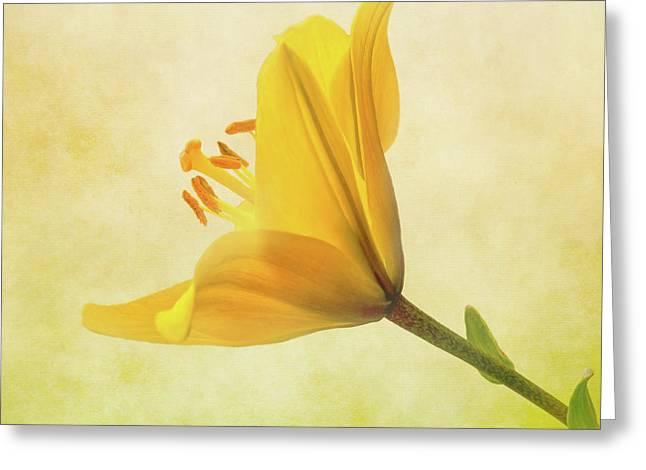 Lemon Lily Greeting Card by Roy McPeak