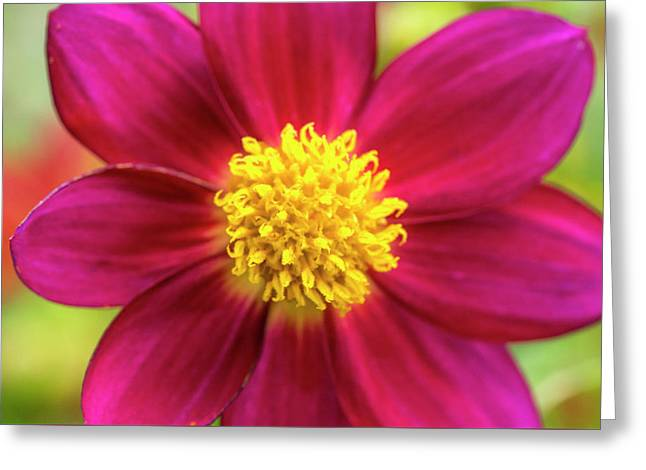 Lemon Yellow On Ruby Pastels Greeting Card by Sean Davey