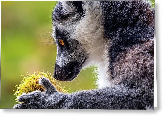 Lemur And Sweet Chestnut Greeting Card