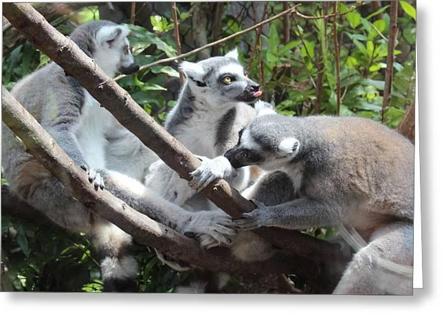 Lemur Family 1 Greeting Card