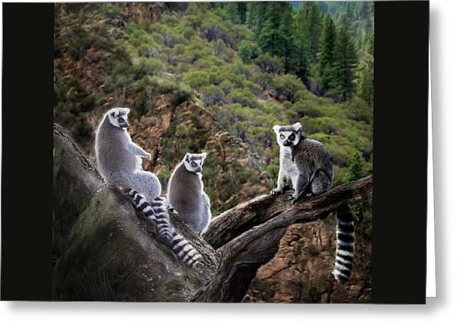 Lemur Family Greeting Card