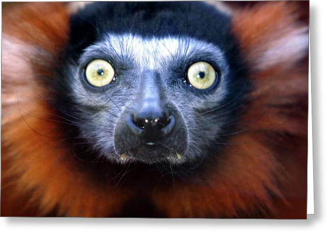 Alan Look Greeting Cards - Lemur glare Greeting Card by Alan Look