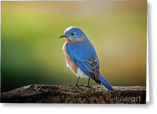 Lenore's Bluebird Greeting Card by Robert Frederick