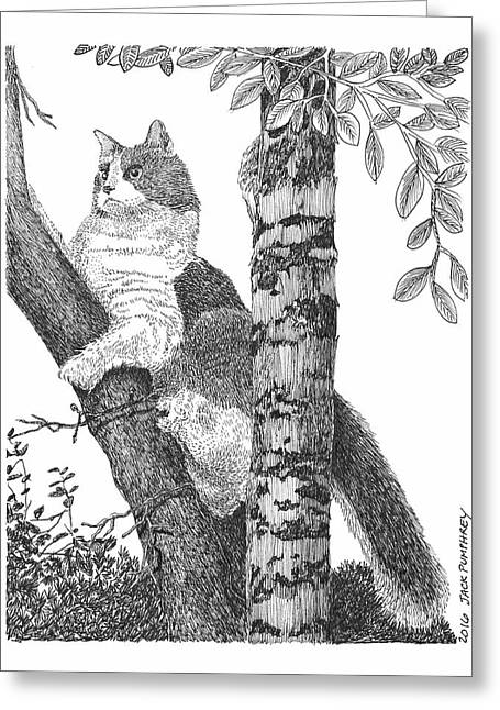 Leo The Cat In The Tree Greeting Card by Jack Pumphrey