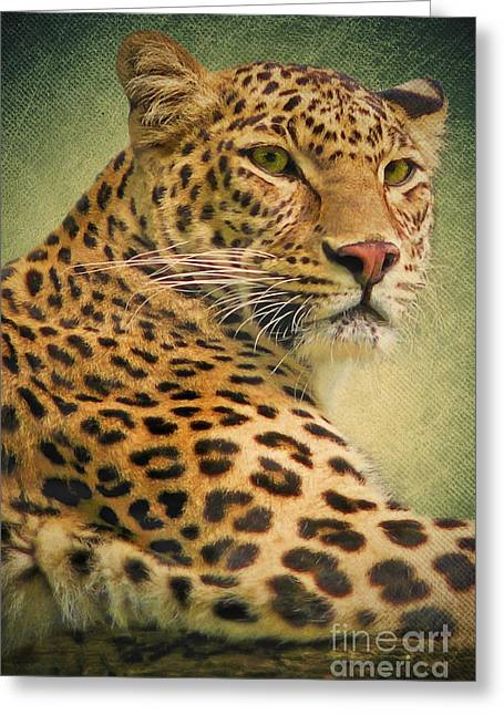 Leopard Greeting Card by Angela Doelling AD DESIGN Photo and PhotoArt