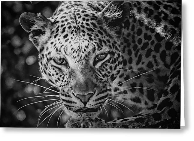 Leopard, Black And White Greeting Card