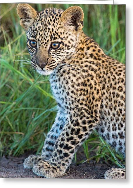Leopard Cub Panthera Pardus, Serengeti Greeting Card