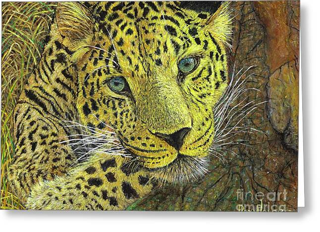 Leopard Gaze Greeting Card
