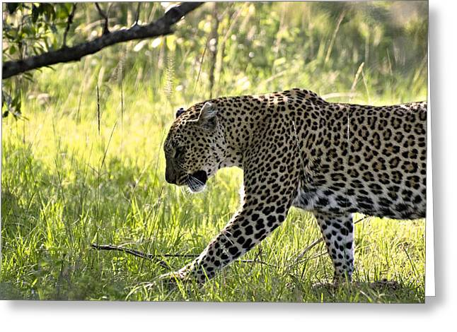 Leopard In The Grass Greeting Card by Marion McCristall