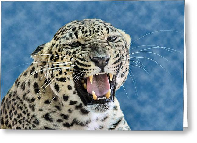 Leopard  Greeting Card by Keith Lovejoy