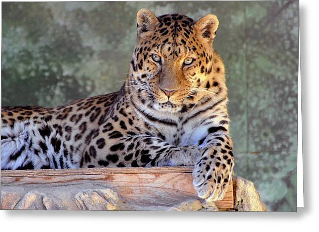 Leopard Greeting Card by Larry Holt
