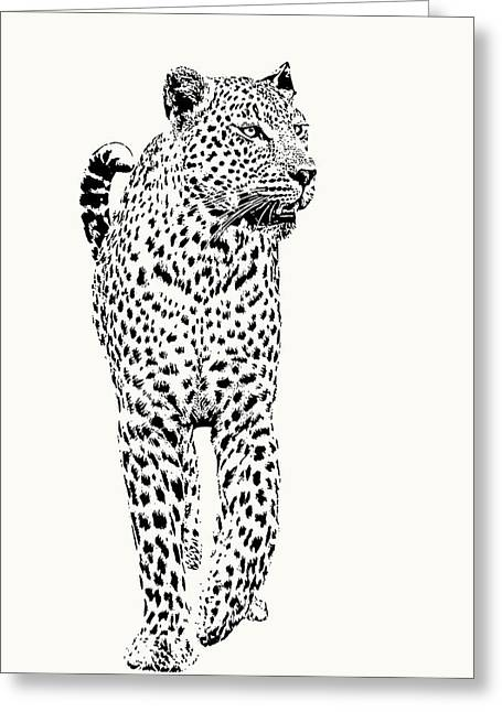 Leopard On Patrol, Front-on View Greeting Card
