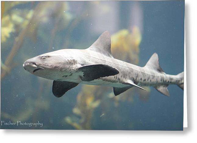 Leopard Shark Greeting Card by Kyle Fischer