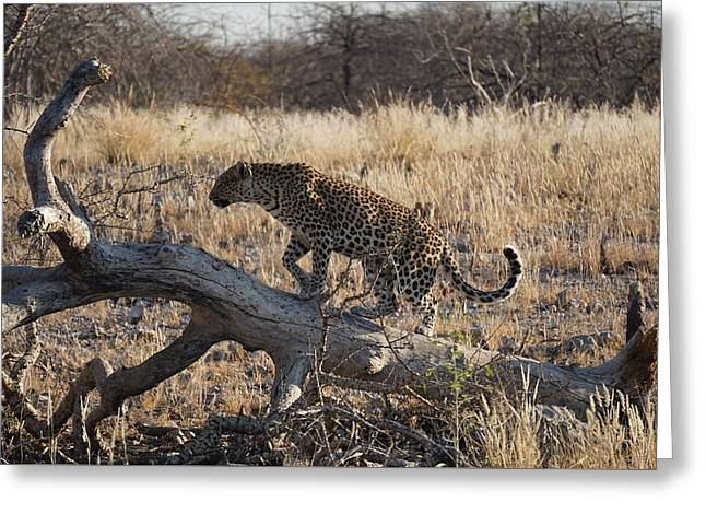 Leopard Tail Greeting Card