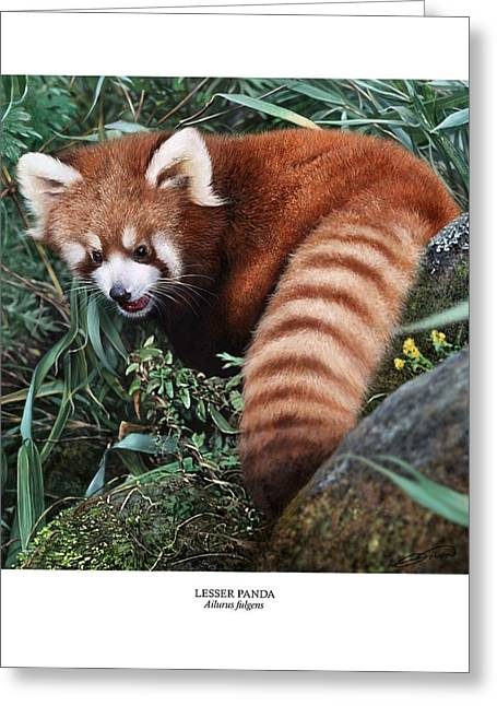 Lesser Panda Ailurus Fulgens Greeting Card by Owen Bell