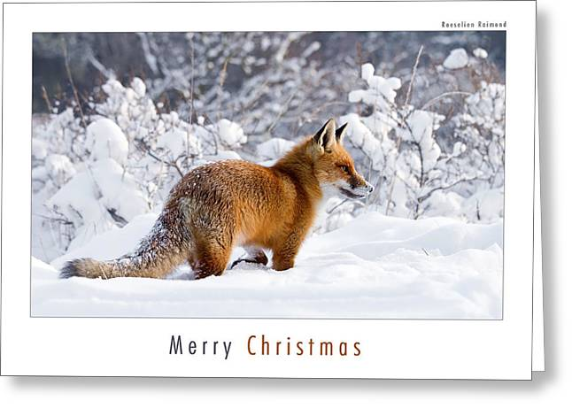 Let It Snow 1 - Christmas Card Red Fox In The Snow Greeting Card