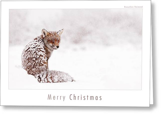 Let It Snow 4 - Christmas Card Red Fox In The Snow Greeting Card