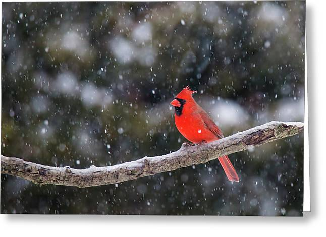 Greeting Card featuring the photograph Let It Snow by Mircea Costina Photography