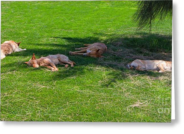 Let Sleeping Dogs Lie Greeting Card by Louise Heusinkveld