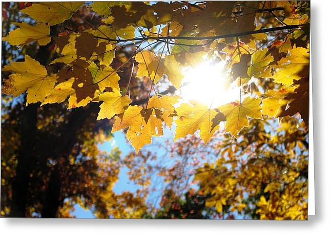 Let The Sun Shine In Greeting Card by Angela Davies