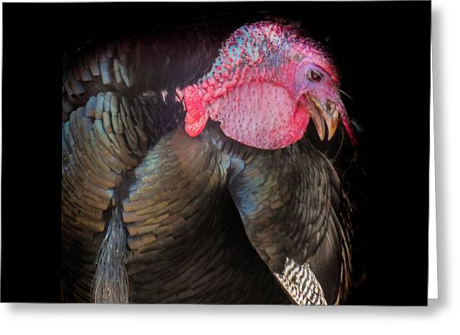Greeting Card featuring the photograph Let Us Give Thanks by Karen Wiles
