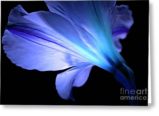 Let Your Light Shine Greeting Card by Krissy Katsimbras
