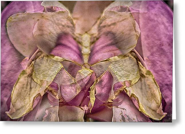 Lether Butterfly Or Not Greeting Card