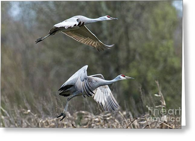 Greeting Card featuring the photograph Let's Go by Craig Leaper
