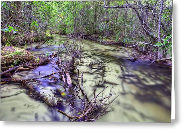 Let's Play Find The Cottonmouth Greeting Card by JC Findley