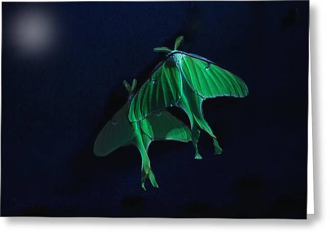 Greeting Card featuring the photograph Let's Swim To The Moon by Susan Capuano