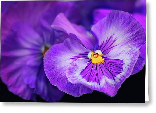 Letters To Violet Greeting Card