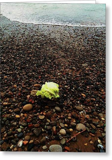Greeting Card featuring the photograph Lettuce by Cyryn Fyrcyd