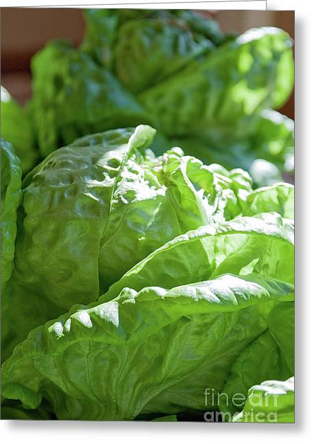 Lettuce For The Blt Greeting Card