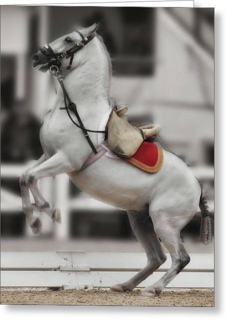 Greeting Card featuring the photograph Levade by Dressage Design
