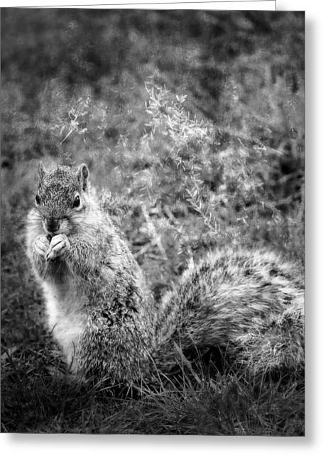 Levi Squirrel Greeting Card by Theresa Campbell