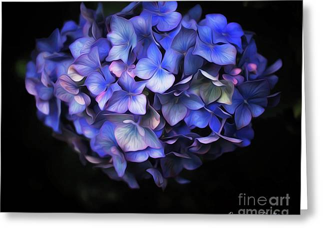 l'Hortensia bleu Greeting Card