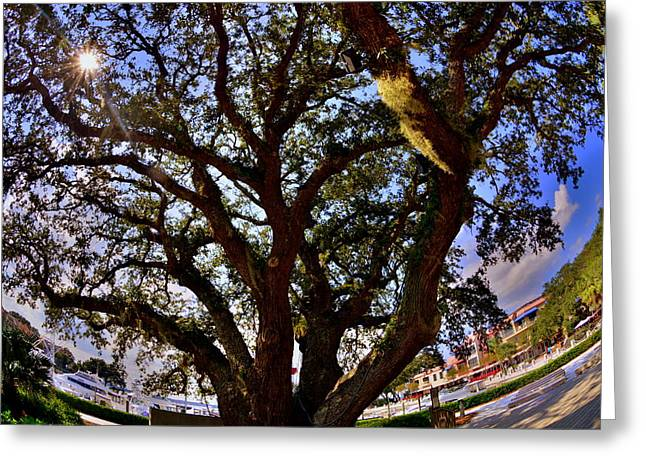 Liberty Oak Harbour Town Hilton Head Sc Greeting Card