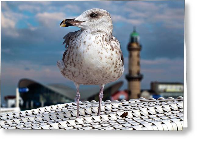 Greeting Card featuring the photograph Liberty Of An Pacific Gull by Silva Wischeropp