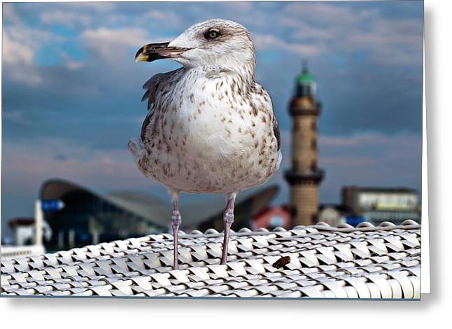 Liberty Of An Pacific Gull Greeting Card