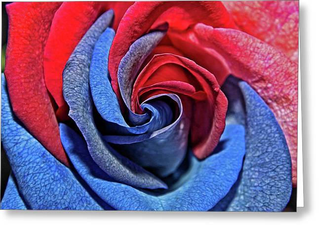 Greeting Card featuring the photograph Liberty Rose by Judy Vincent