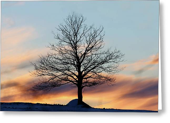 Liberty Tree Sunset Greeting Card