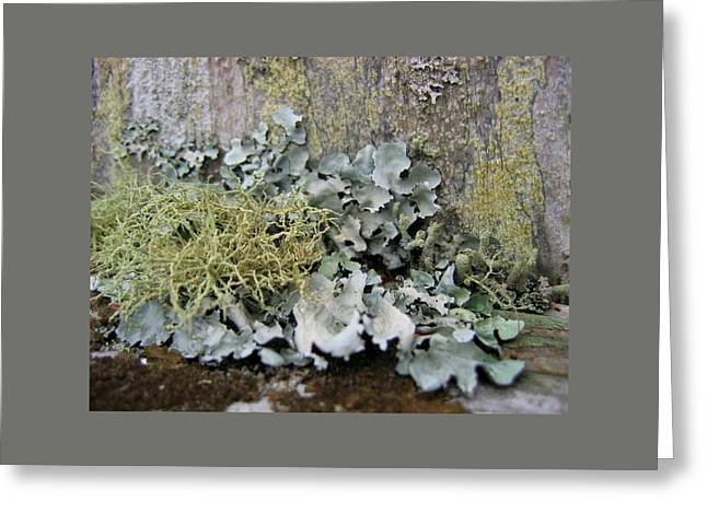 Lichen And Old Fence #2 Greeting Card