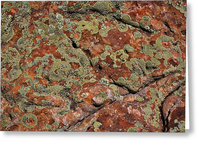 Lichen At The Ghost Ranch #2 Greeting Card by Stuart Litoff