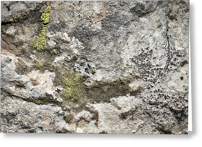 Lichen At The Ghost Ranch Greeting Card by Stuart Litoff
