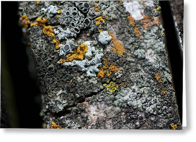Lichen At The Top Greeting Card by Wilma  Birdwell