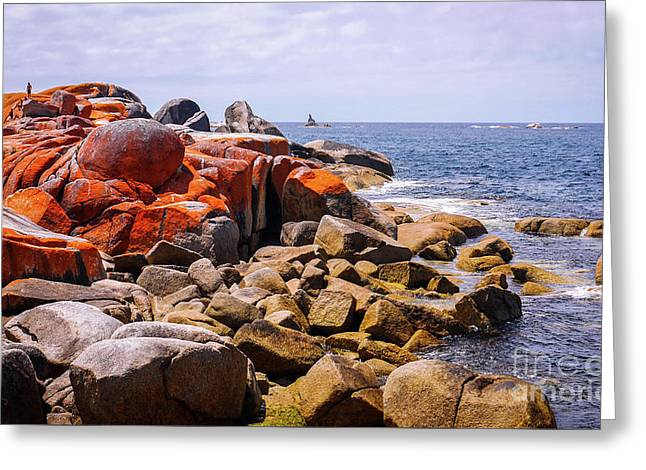 Lichen Covered Rocks Bay Of Fires Greeting Card