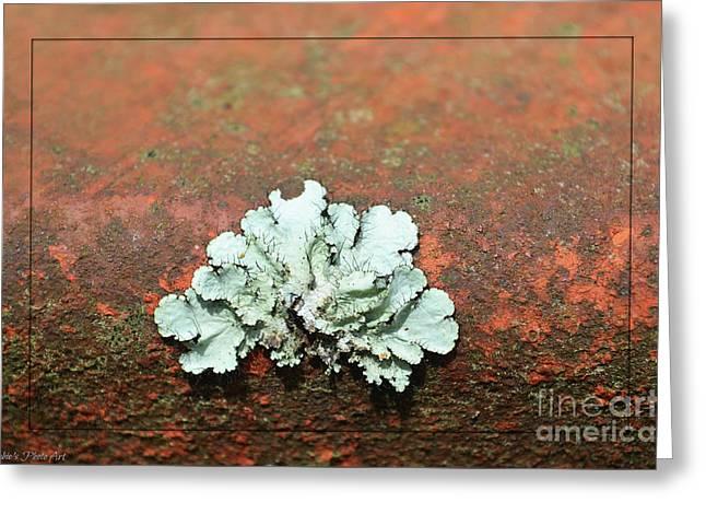 Lichen On Rust Greeting Card