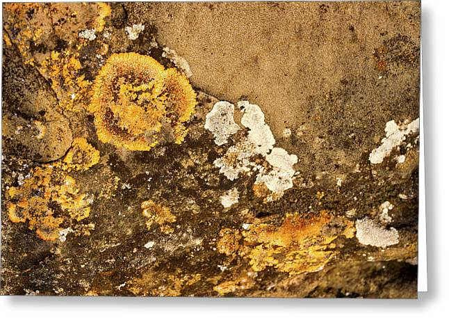 Greeting Card featuring the photograph Lichen On The Piran Walls by Stuart Litoff