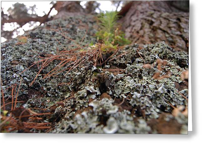 Lichen Tower Greeting Card by Jean Booth