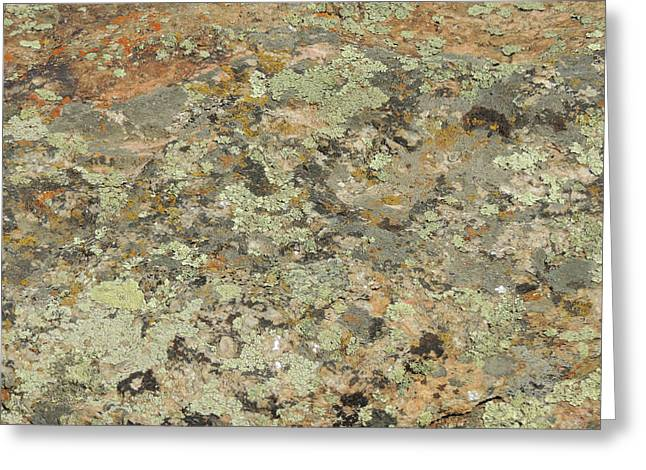 Lichens On Boulder Greeting Card